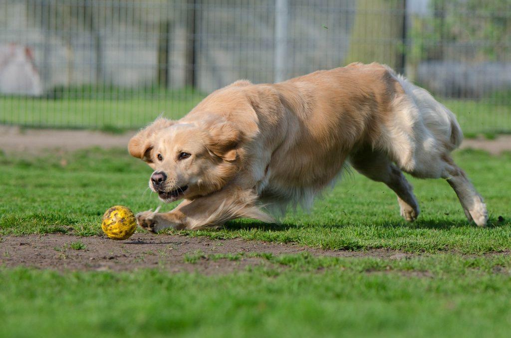 Hondenpension Kennel